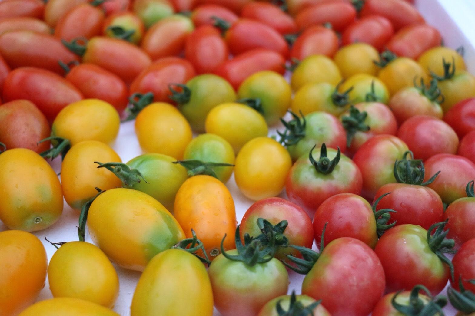 トマトは栄養たっぷり