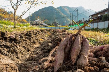 農業分野における生産性の高い作物とは
