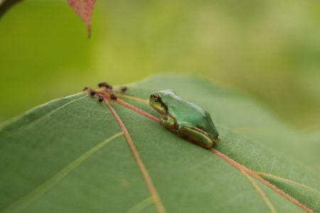 今話題!?天敵昆虫が農業の救世主になるのか