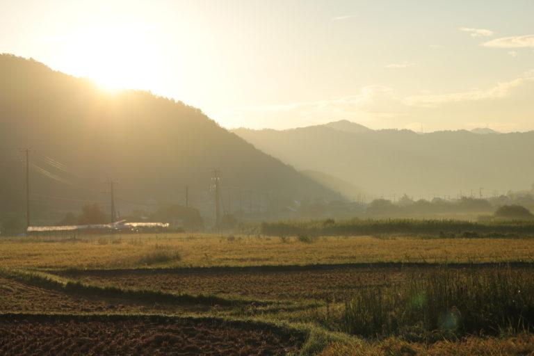 【若手農家の日常】里山の朝