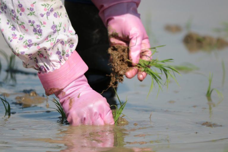 【若手農家の日常】田植えの一手間